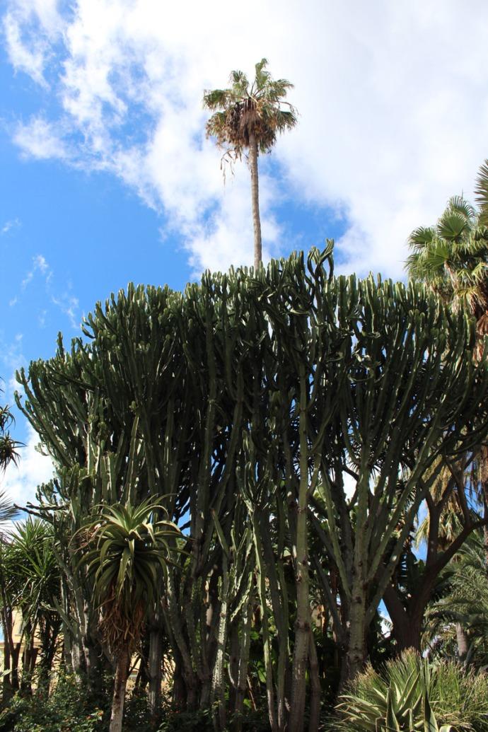 Sorrento cactus and palm