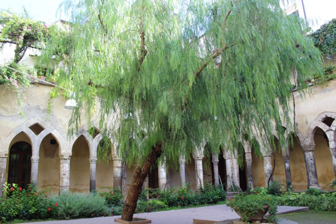 Sorrento Cloister willow