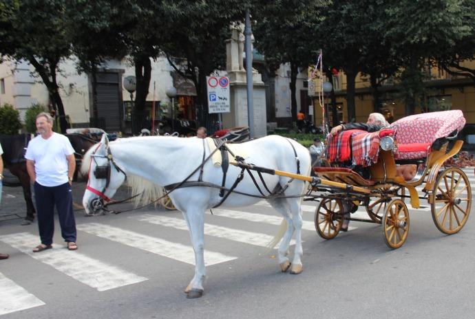 Sorrento horse & carriage
