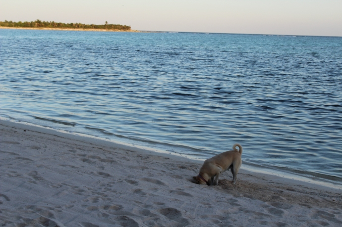 Mimi digging, bay view