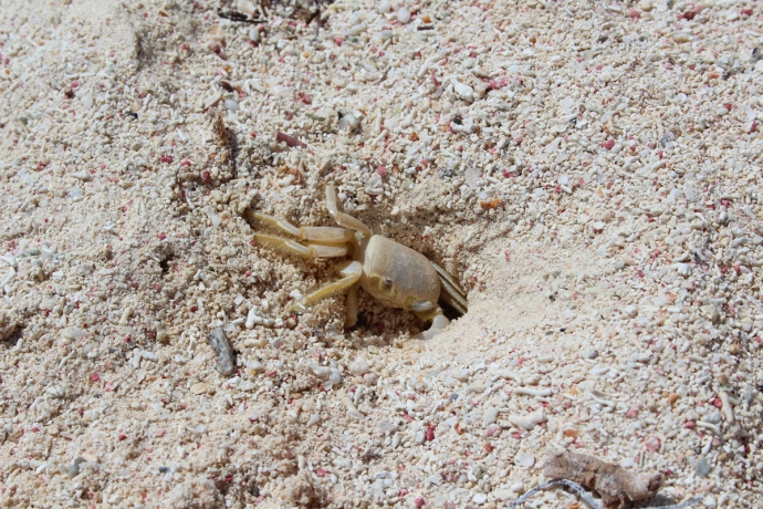 ghost crab going away