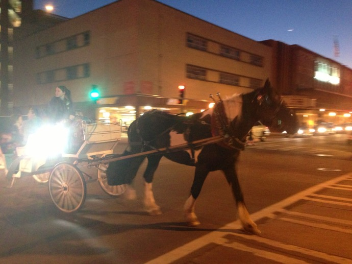 Savannah horse & carriage