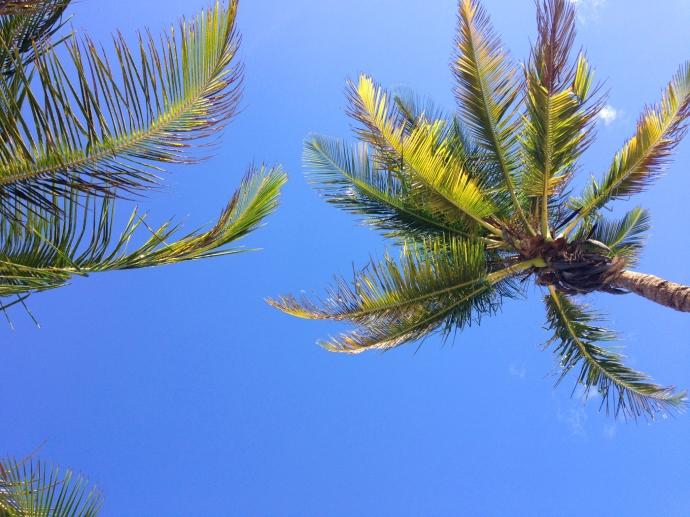 Soliman Bay palm tops hori