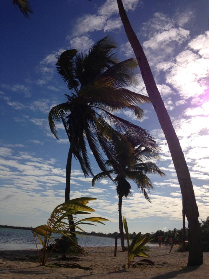 Soliman Bay palms vert