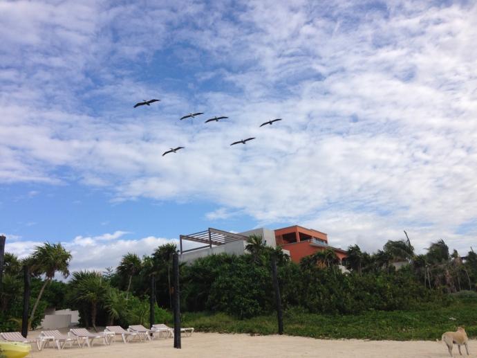 Soliman Bay pelican patrol
