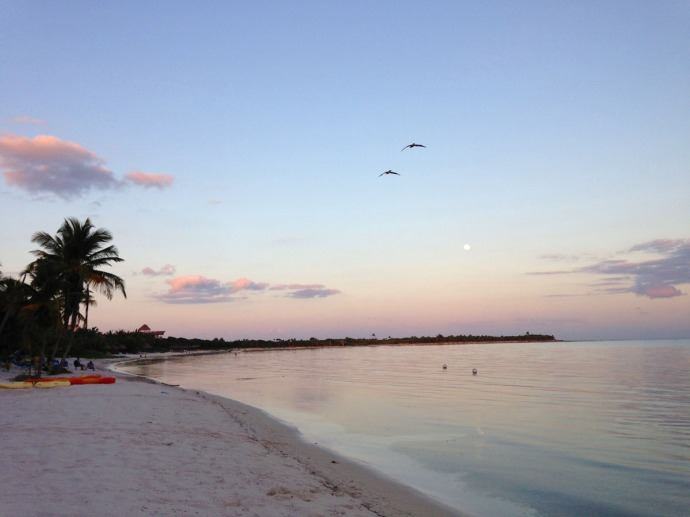 Soliman Bay sunset, pelicans, pastels