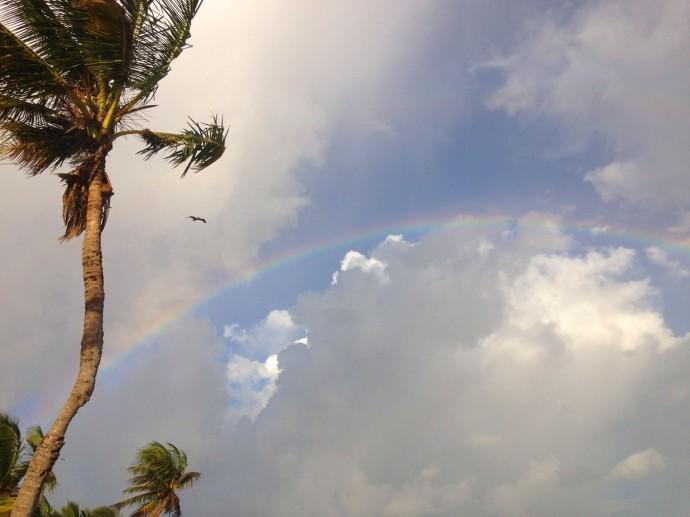 Soliman rainbow, palm, bird