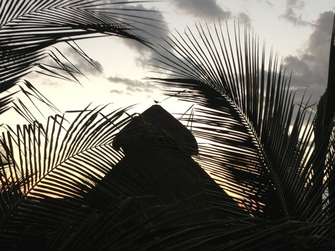 Uxibal palapa top bird centered sunset