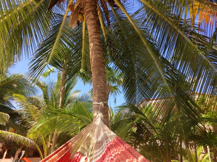 Uxibal red hammock, palm, big hori