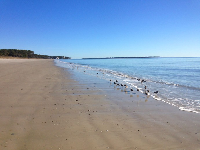 Daufuskie Beach, Blue with birds