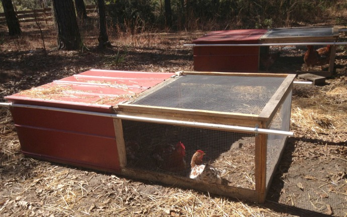 Daufuskie Farm mobile chicken coops