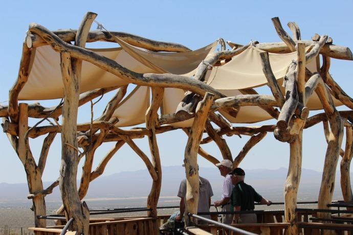 Desert Museum mesquite overlook