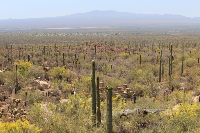 Desert Museum vista view