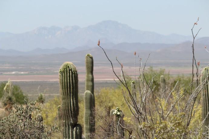 Desert Museum vista