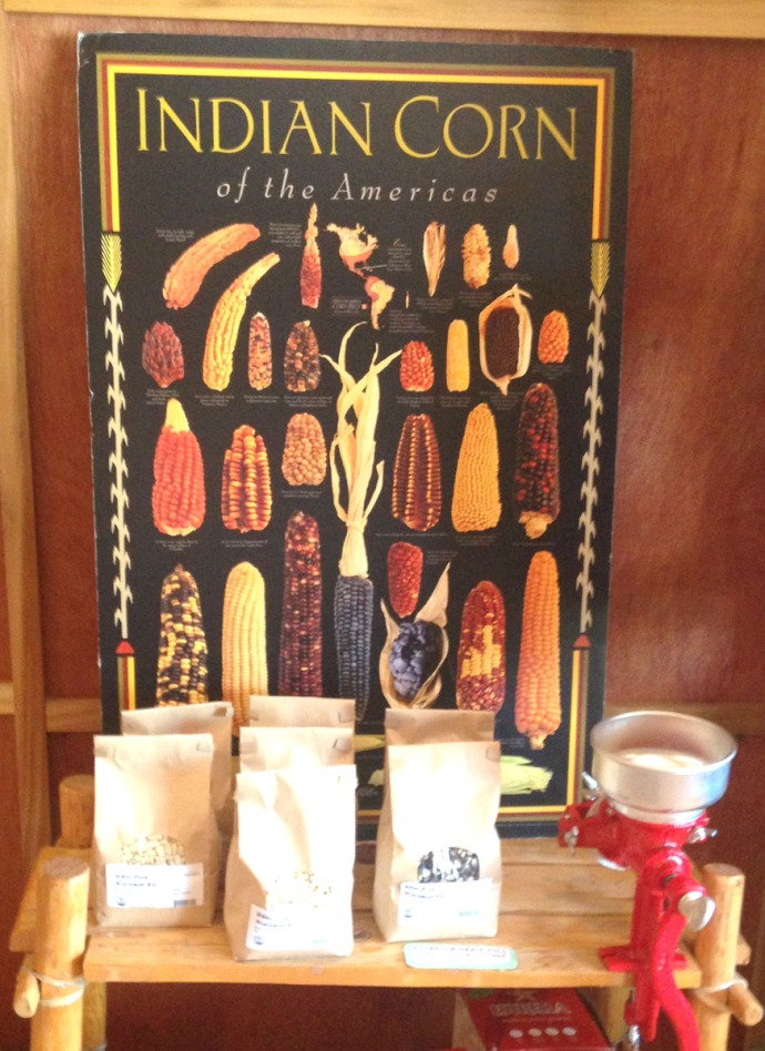 Native Seed Search Indian Corn display
