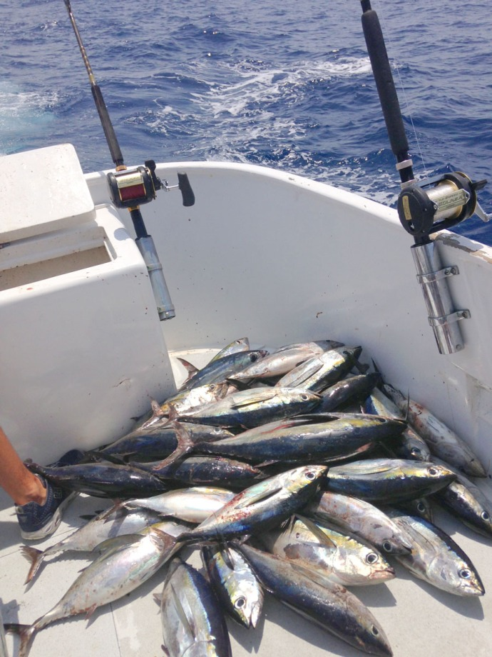 Albatross Fleet blackfin tuna pile