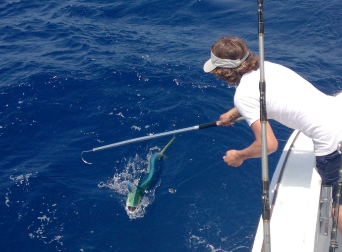 Albatross Fleet, Sumner gaffing mahi mouth open