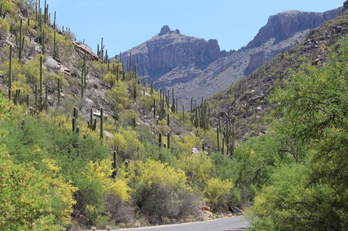 Sabino Canyon mountain view blooms