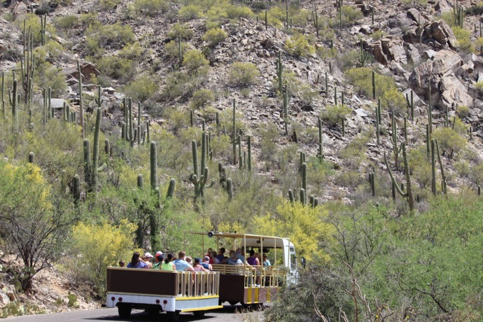 Sabino Canyon people trolley