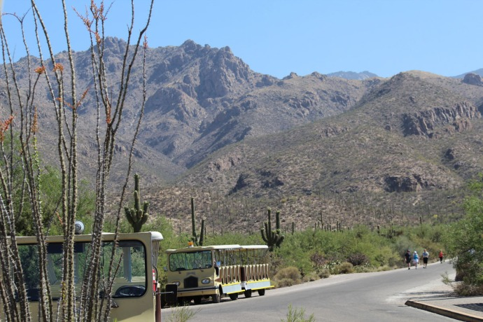 Sabino Canyon trolleys and mountain view