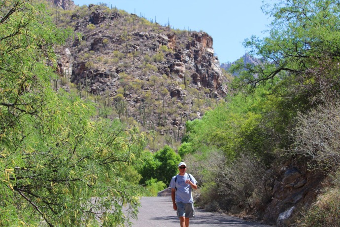 Sabino Canyon Wally walking