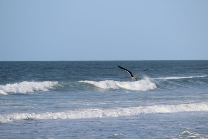 Frisco, bird hunting, surf