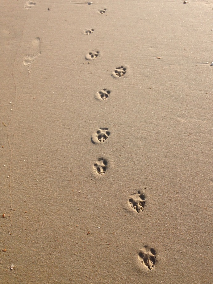 Frisco, dog footprints