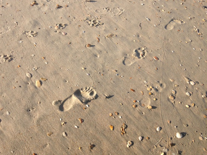 Frisco, footprints and shells