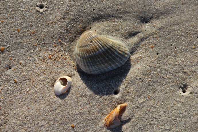Frisco, shell and sand