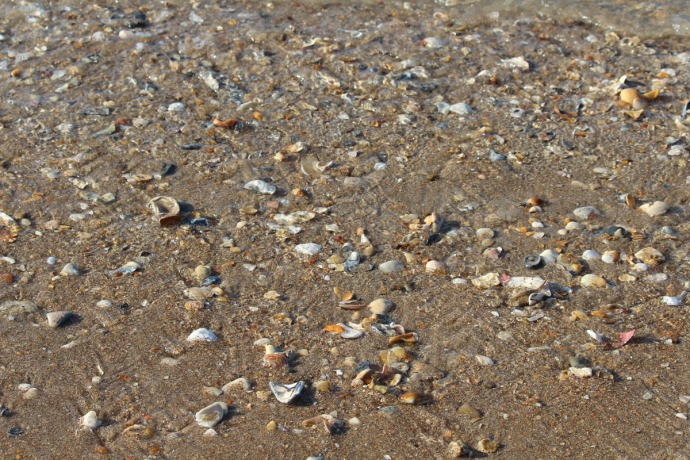 Frisco, Shells everywhere