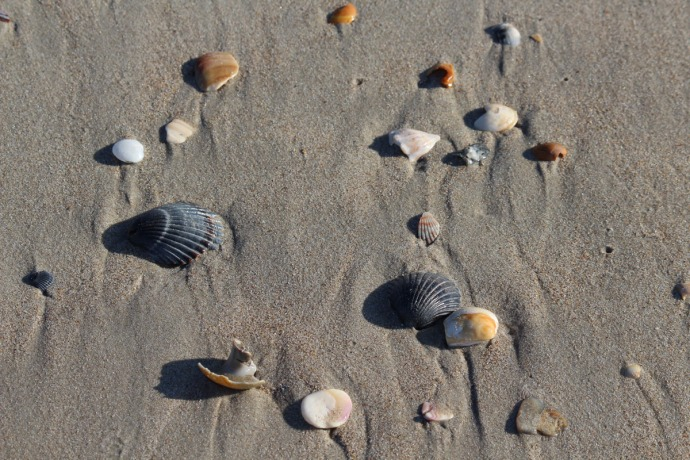 Frisco, shells on sand