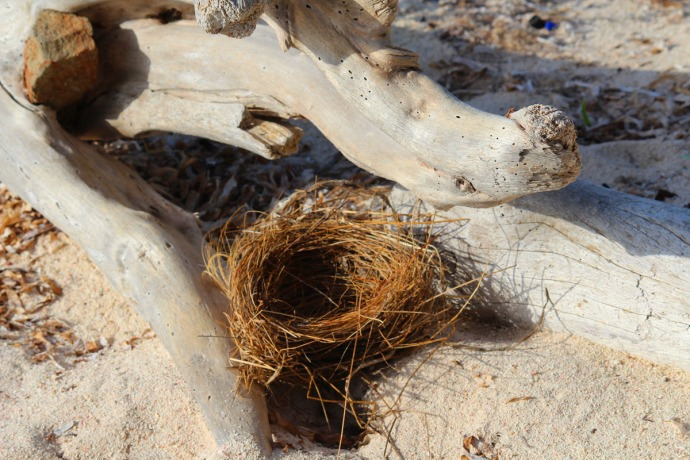 birds nest on ground