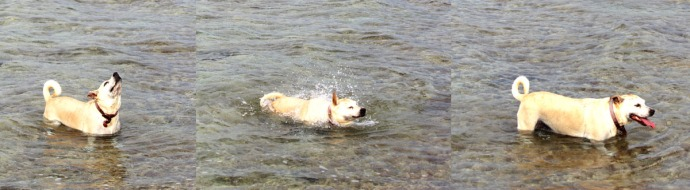 Mimi shaking water 3