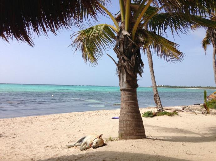 Mimi under palm, aqua water