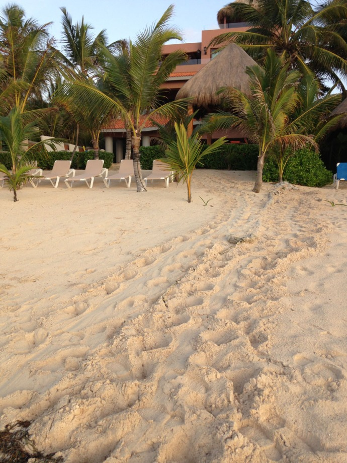 Soliman Bay turtle tracks to house