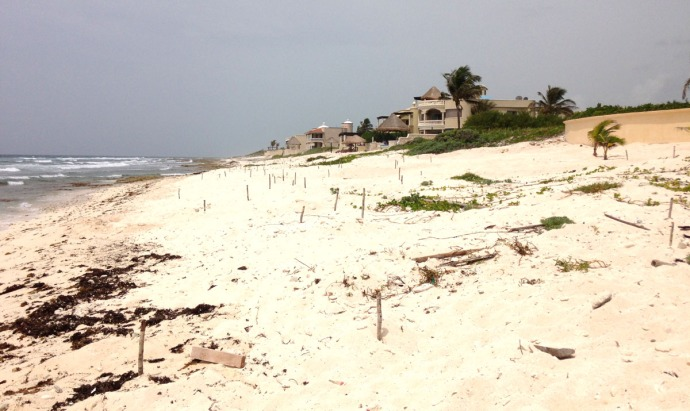 Tankah turtle nests wide view