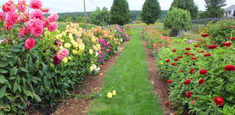 Amish Country, Beilers Farm flower rows