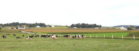 Amish Country, dairy farm