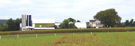 Amish Country, farm scene 2