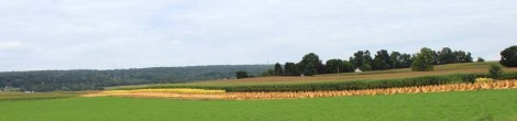 Amish Country, tobacco cut