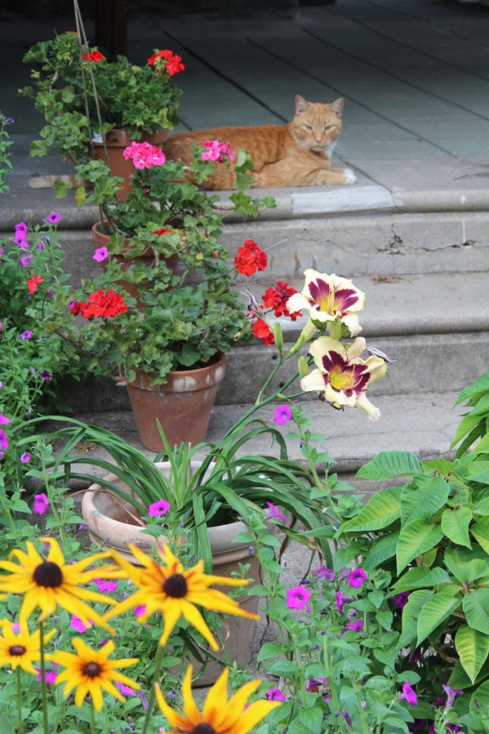 George Boyden's cat & flowers